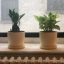 The Sill's plant delivery service will convince you of your own green thumb