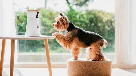 Furbo dog camera is 20% off at Amazon