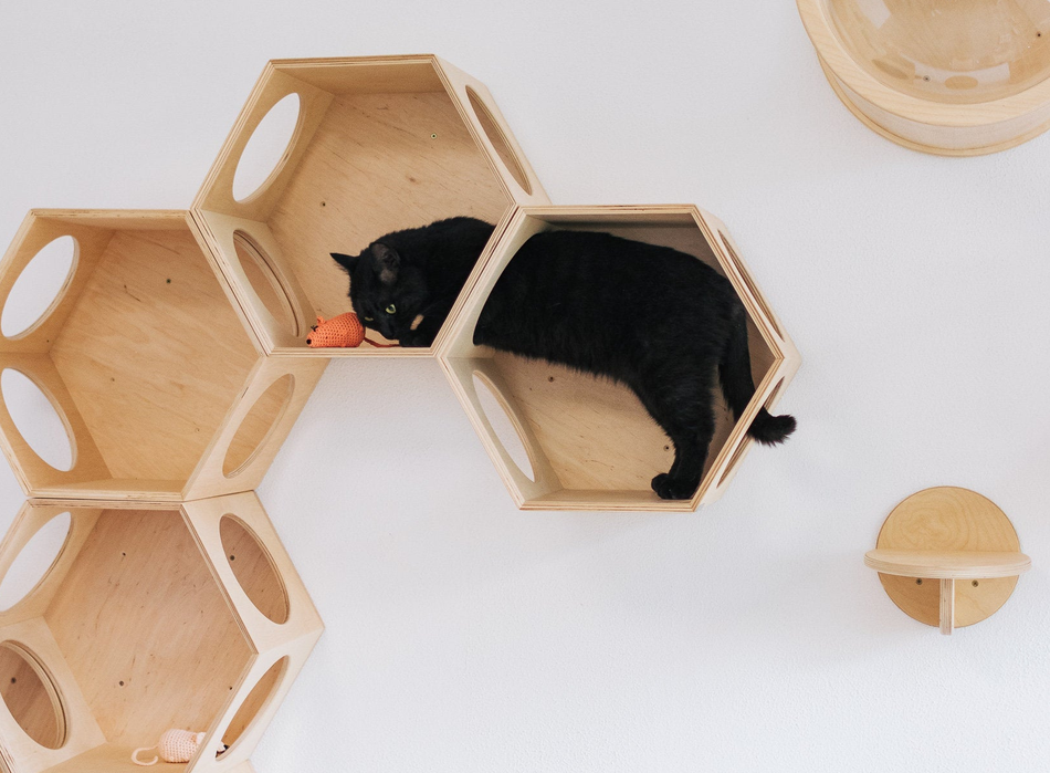 Turn your home into a mini contemporary museum while distracting your cat from scratching the furniture.