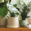 Add some greenery to your home with The Sill's 50% off Cyber Monday sale