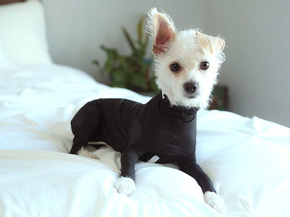 The world's first onesie for dogs reduces stress and shedding (but not cuteness)