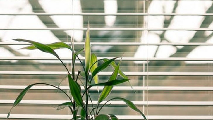 We can finally open and close our blinds, shades, and curtains with our phones